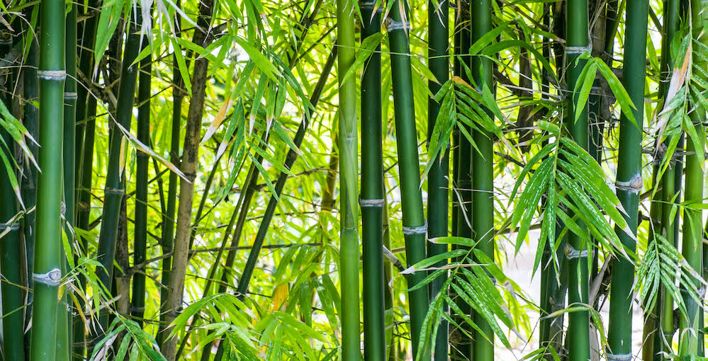 A Bamboo Mind